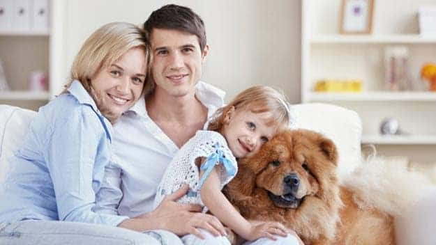Wills & Trusts dog-young-family Direct Wills Carne